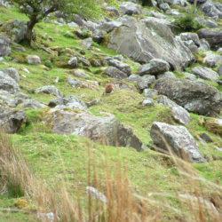 hare & rocks